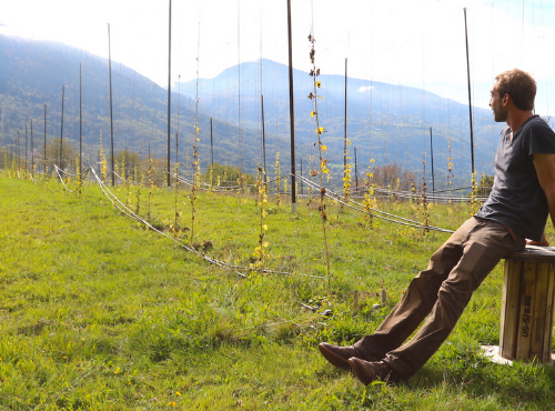 La houblonnière de Vaulnaveys-le-bas (38) © Une Petite Mousse