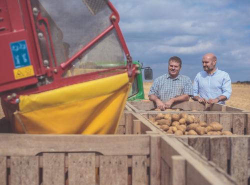 Les pommes de terre sont déversées dans des palettes de stockage © Gaetan Clément