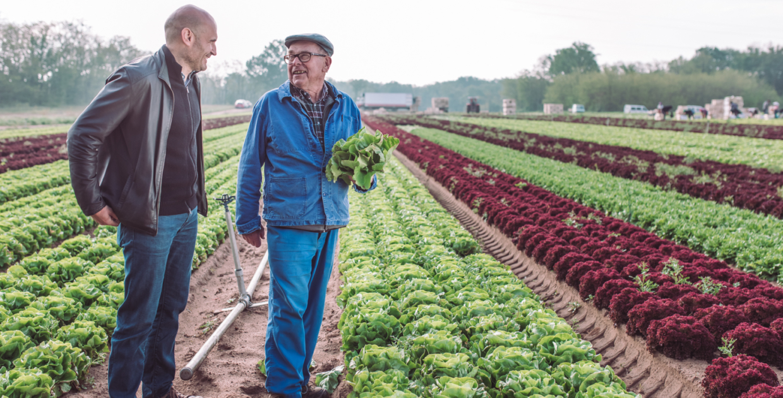 notre producteur de salade, la famille Gros