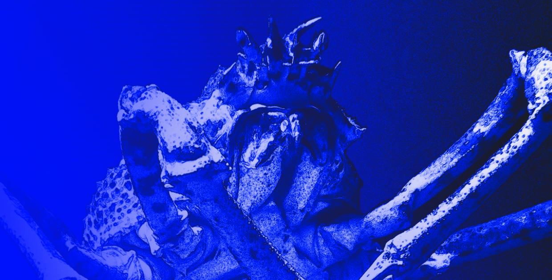 Tapage Nocturne x Voxnox Records : Opal + Lorenzo Raganzini